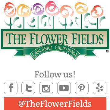 The Flower Fields 2016 Season