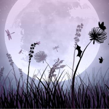Floriade NightFest 23.09.17-img