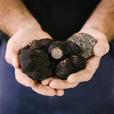 Perigord Truffle Dinner