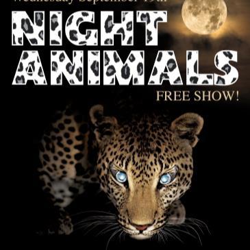 NIGHT ANIMALS (freee show)-img