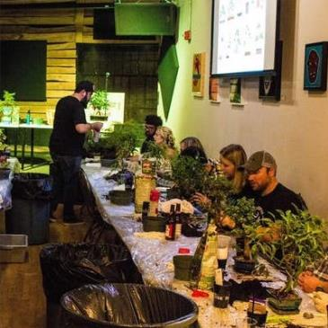 Create Your Own Bonsai Tree Workshop: Main Image