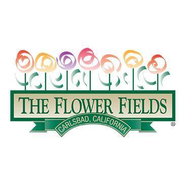 The Flower Fields 2020: Main Image