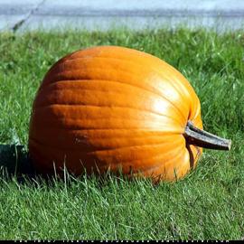 Central Park Pumpkin Scavenger Hunt (Adults Only) | GametightNY.com